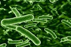 news_1102-prebiotici